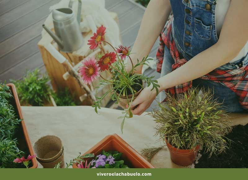 La Jardinería como Actividad Terapéutica